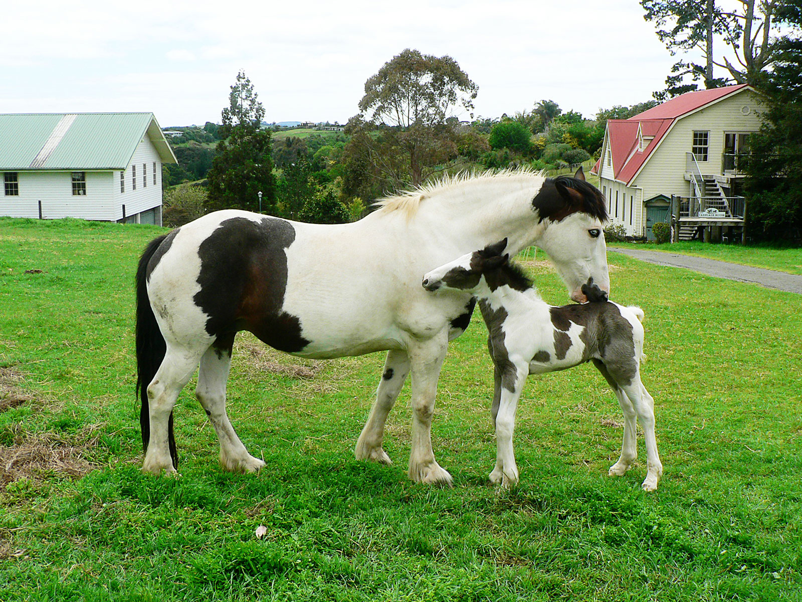 horses outside the carriage house farmstay northland nz