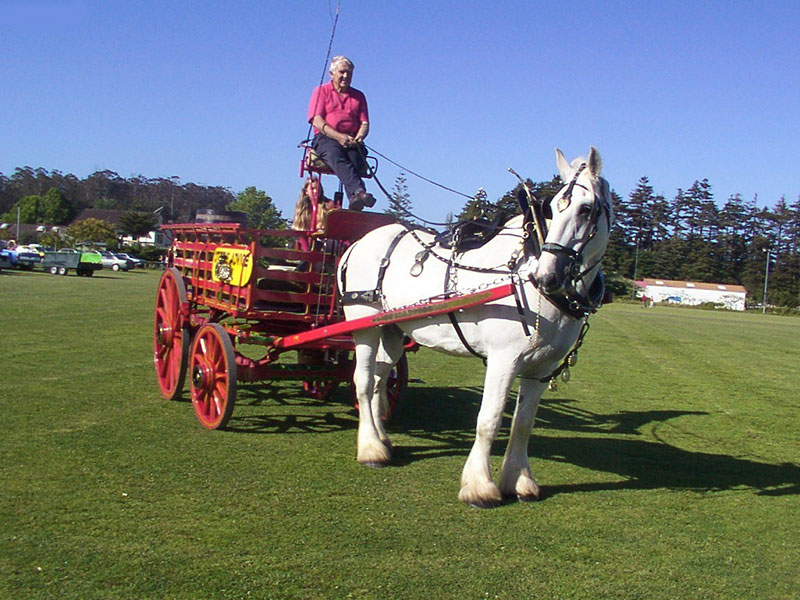 heavy horse and cart at the carriage house kerikeri with host adrian garrett